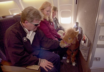 Cuddles on the first flight of a horse on a commercial flight