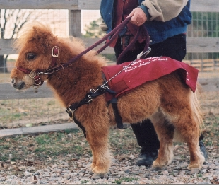 Cuddles in Harness - Copyright (c) 2001 by Cathleen MacDonald